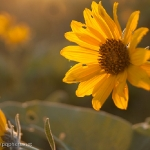 Queneau_wildflowers-6311