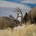 Muleys-sparring_11-1-09-9489